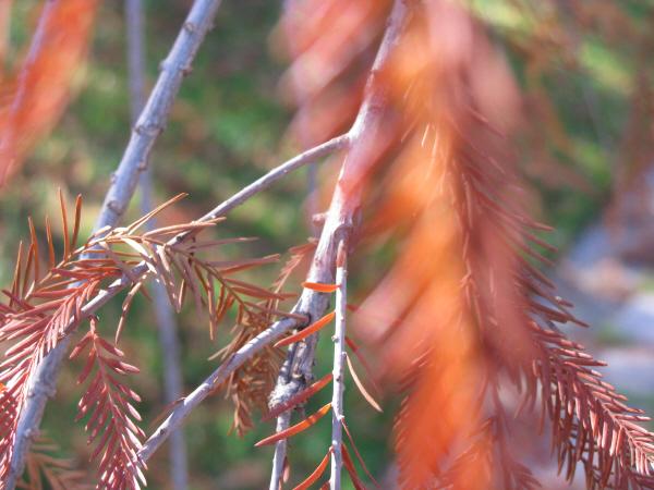 prod06,fondo,background,naturaleza,nadie,otoño,seco,arbol,rama,ramas,hoja,hojas,fuera de foco,fresco,frescura,
