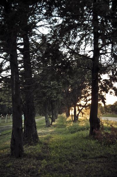 ,pedro ramundo,paisaje,dia,aire libre,exterior,arbol,arboles,naturaleza,atardecer,ocaso,puesta de sol,hilera,camino,rumbo,color,colores,campo,escena rural,nadie,soledad,tranquilidad,arboleda,,AGO2010