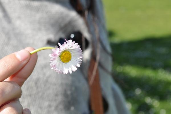 imagen de flor  enfoque preferencial  primer plano  de