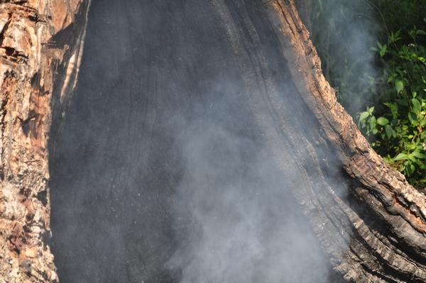exterior, de dia, naturaleza, humo, madera, vegetacion, verde, flora, fotografia, horizontal, imagen a color, nadie, simple, actividad de ocio, isla del delta,ABRIL2013