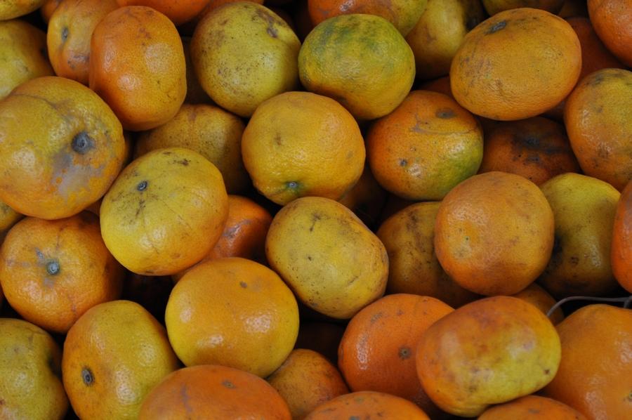 mandarina,mandarinas,naranja,fruta,frutas,mucho,muchos,fondo,background,P12062014