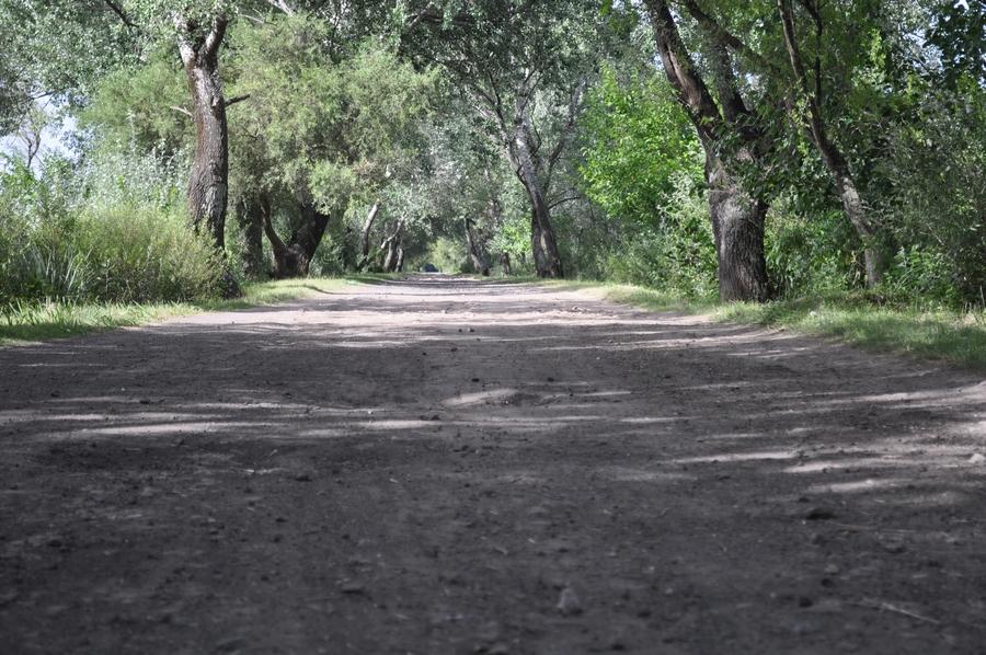 ... ,carretera,camino,calle,exterior,tiempo libre,bosque,nadie,,P12062014